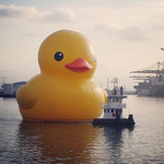 RT @KTLA: Find out the best lookout spots for the 6-story-high rubber duck making an appearance today: http://t.co/XukYhqz7ek http://t.co/ujlZ2GQGYs