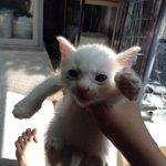 RT @okudarei: #緊急 #拡散希望 #里親募集 #静岡県 #仔猫 QT @rilmajic この前の見つけたネコ こんなに可愛いです(笑) 捨てるのわほんとに嫌だから誰か貰ってくれませんか?#拡散希望 http://t.co/PPi5IZ69VP