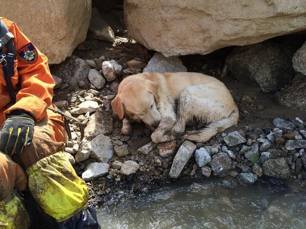 午後の広島の被災現場。救助犬もちょい疲れ気味か? ご苦労さん http://t.co/0rowx7F5v6