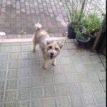 RT @cottleston1027: 広島【迷子犬です】広島市安佐南区八木4丁目 土砂災害に見舞われた場所でドロドロになってさまよっていたところを友人が保護しました。お心あたりの方は、こちらご連絡をください。https://t.co/lUHr0IfXVy http://t.co/5g4pf9K4Eu