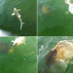 RT @g1: Peixe enorme choca pescador ao engolir de uma só vez tubarão de 1,2 metro http://t.co/yjydiKvwZY #G1PlanetaBizarro http://t.co/zYPGl7Y5Zc