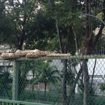 "WTF??? ""@Jeejay7: A huge python very near to a bus stop??? http://t.co/iOkQ37Q41F"""