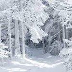 RT @Hazzowe_Loczki: U was też jest tak biało za oknem? #RobimyŚwiatecznyNastroj http://t.co/f28eWICHvl