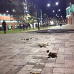 """""""Can you polish a turd?"""" The aftermath of #PMVisit #AbbottFence http://t.co/Vr0eOBEgJC"""