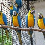 Причина, по которой эти попугаи отбывают пожизненное заключение в зиндане - оперение цветов украинского флага http://t.co/ICmPv37YMW