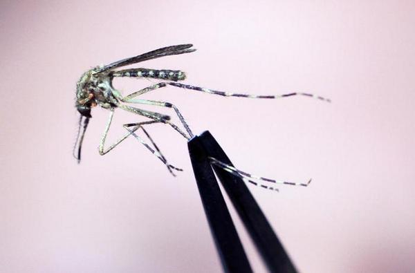Mosquitoes with #WestNile found in South Boston http://t.co/einQf2BMiB http://t.co/rrO7QidpWQ