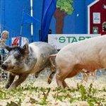 RT @TheSpec: Get ready for the Fall fairs #HamOnt http://t.co/TgA6kHt8Q3 http://t.co/cZH7SjGaVA
