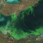 RT @TheSpec: No swimming - Algae blooms hit Hamilton and Haldimand http://t.co/C3e1OZJ6vh http://t.co/9GQw44RdWc