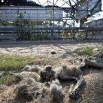 """""""@ecuavisa: Los animales de #Gaza también sufren por el conflicto http://t.co/8xAOvQ0hvc http://t.co/wq3iaza7wX"""" QUE HJP"""