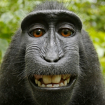 RT @suka_hiroaki: And the jury is in: This monkey selfie CANNOT be copyrighted US regulators say. http://t.co/UmDi3jGojw http://t.co/EDSulhK6SW