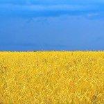 Следственный комитет возбудит дело против Господа Бога, в августе окрашивающего поля в цвет флага Украины: http://t.co/ag9USvNg9x