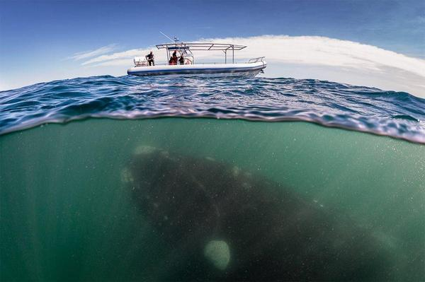 This is an awesome shot of a whale underwater. http://t.co/fBFJ8A9Qn3