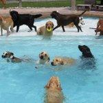 RT @ecuavisa: #VIDEO Una pool party para perros en Estados Unidos ► http://t.co/ZtwcSeoHzL http://t.co/KCmsmlQLfZ