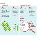 RT @el_pais: ¿Cómo actúa el suero experimental del #ébola? → http://t.co/hBfSluXWaX Gráfico → http://t.co/pT19IKLnj9 http://t.co/YCfULtVQ6k