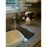 This did make me laugh #IceBucketChallenge 😂 http://t.co/W7uwChDHep
