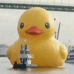 RT @CBSNews: Worlds largest rubber duck makes way into LA port http://t.co/40MNSNdQxs http://t.co/Cte6hzrXxr