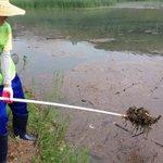 RT @bmbm2001: 어제 내린 폭우로 인해 율동공원 호수에 부유물이 생겨 제거작업 중에 있습니다. 항상 깨끗한 공원이 되도록 노력하는 성남시 직원들입니다 :) @seongnamcity http://t.co/ng5e39IFfC