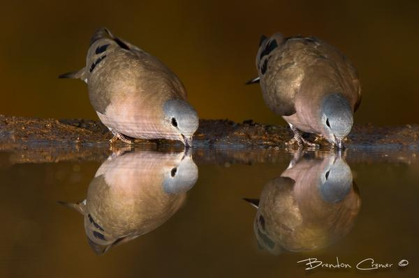 Side by Side.   Image by Brendon Cremer. http://t.co/y2rxx7Xk1o