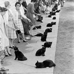 ロジャー・コーマン『黒猫の怨霊』のオーディション風景らしい http://t.co/P0S4XXsnpL RT @modi_operandi 黒猫を並べて何をやっているのだろう? https://t.co/Oq5UQCBwxB