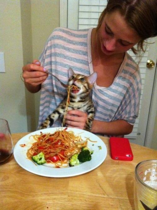 Что приготовить сегодня кушать в