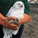 RT @nbcwashington: SAD NEWS: A rare snowy owl who was apparently hit by a bus in the Washington, D.C. has died. http://t.co/aulrhkkxB5 http://t.co/XBYaypR8nE