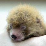 RT @washingtonpost: A year ago, National Zoo panda Bao Bao was born. 154 baby zoo animals have followed http://t.co/RrQTXkkQEb http://t.co/O0AKKl6dtS