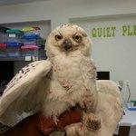 The snowy owl is dead. http://t.co/it6vvKKjsN http://t.co/RP2fVw7mgH