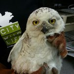 Sad owl news: The D.C. snowy owl has died, apparently after getting hit by yet another vehicle http://t.co/UCdhk2sW3O http://t.co/Z1ls3ifcjO