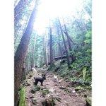 RT @SweetPeaAndMe1: Going up!! Way up!! #northvan #northvandogs #sweetpea #dogadventures #dogsofcanada #vancouver #vancouverdogs http://t.co/AUPUfEDWCW