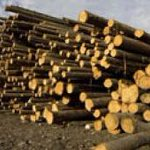 RT @CBCNews: First Nations forestry plan injunction request denied http://t.co/Mt6VqtNEi7 http://t.co/HvLdykCYjB