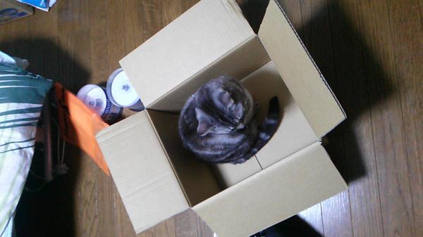 荷造りしてるのにこれである http://t.co/j4N1W3sTs4