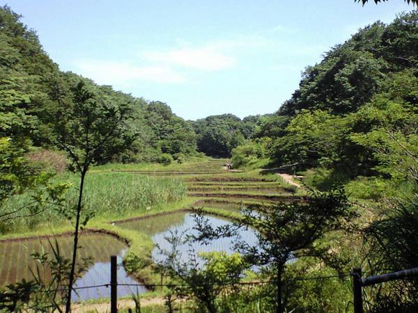 「舞岡公園 画像」の画像検索結果