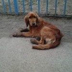 RT @cumbispa: @RADIOPALOMAFM Favor Compartir! se perdió perrita Lala, collar rojo,sector pucara. Fono61040703 graxs http://t.co/z95ChNWblf