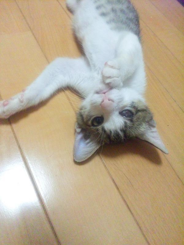 【僕の新しいお家を探してます】右目が失明していますが元気一杯です♪小柄ですが生後4ヶ月位♂。猫エイズ、猫白血病、検査時陰性  http://t.co/pdzWrnc7P9 http://t.co/nT4BGWIWdH