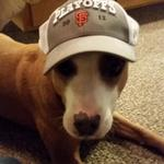 RT @DejaVuDog: @FearTheFur @SFGiants Solidarity! Woof! WOOF! #GoGiants! http://t.co/faVdDMVRAc