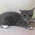 "RT @MeowMiyashita: ""@URGENTPODR: Madeline is very social beginner cat. #nyc #homeless #cats http://t.co/iAihBGx7Mp http://t.co/bXDrXMNgO4"""
