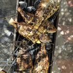 بمناسبة انتصار غزة وجبة سمك على الفحم في شوق وانتظار لسمك غزة الذي له طعم آخر #غزة_تنتصر http://t.co/Ao2fQtFimL