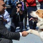 "Maipú rescata a perros callejeros para crear ""brigada de seguridad canina"" http://t.co/zxKptAJISE http://t.co/VdHK03xNHu"