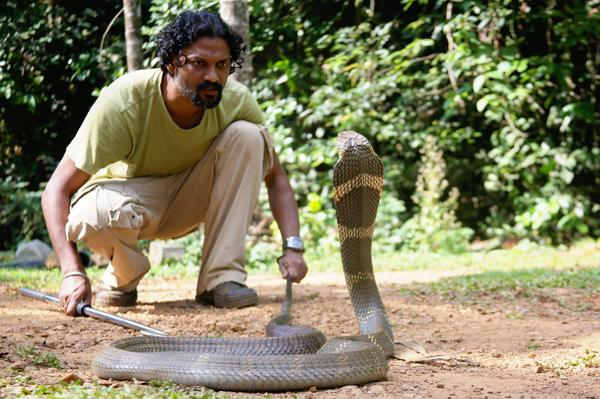"""I thought I was going to die"". Snake rescuer Gowri Shankar, who survived a King Cobra bite (Credit: H.Vinod Gowda) http://t.co/Yu3j2IJbZd"