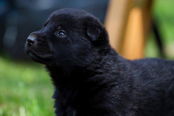 Photos of Kye as a puppy. #RIPKye http://t.co/ZvrwkZjM7O