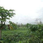 RT @GloriaVictoriaS: @DeborahWAPA Caguas. Parece q esta lloviendo para las montañas d Cayey pero no, es polvo del desierto q nos afecta. http://t.co/P7o6iZa0s4