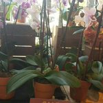 RT @myriadgardens: All #orchids at @WholeFoodsOKC on sale $9.99 today, was $24.99. 5% of all sales at Whole Foods benefits Gardens http://t.co/pZycObhf4K