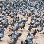 RT @LaTiaEvelyn: ¡ALERTA! Miles de peruanos invaden triángulo terrestre! http://t.co/CjPpV1h9Lo