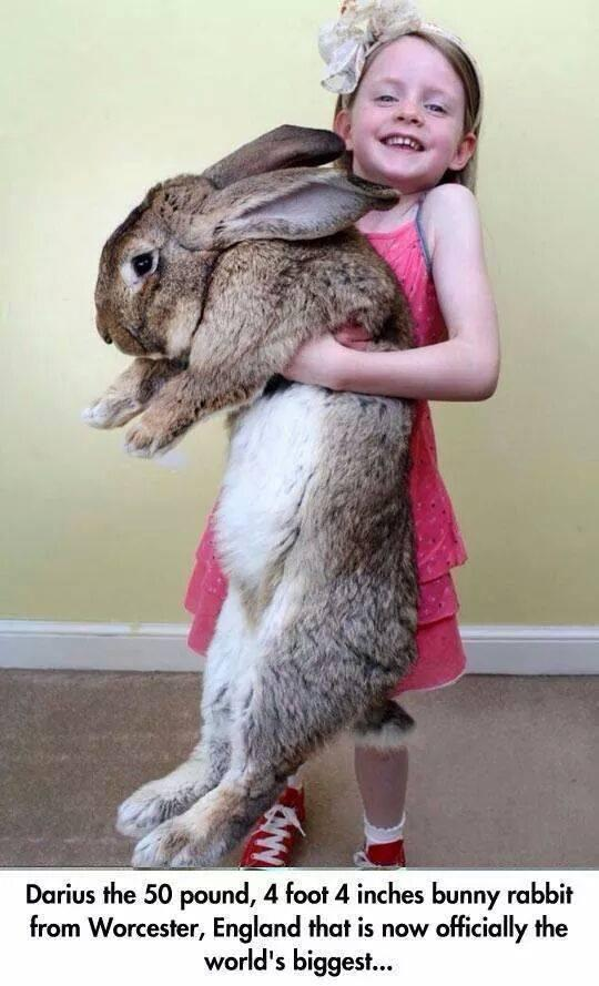 World's biggest bunny: http://t.co/V9hhuCHZvK