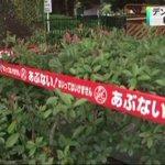 RT @livedoornews: 【デング熱】級友2人も感染、代々木公園で蚊に刺され http://t.co/grkEdQGeaq 2人は27日に感染が発表された10歳代女性と同じ都内の学校に通うクラスメート。ともに同時期に代々木公園で蚊に刺されたという。 http://t.co/N2keAgviaA