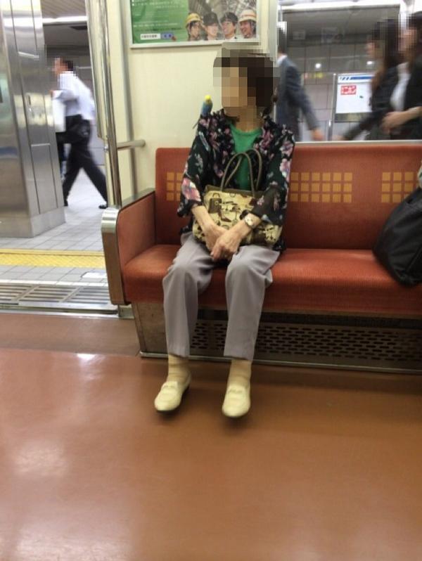 電車の中、おばあちゃんの肩に、セキセイインコ。 http://t.co/rvufAKVvPa