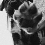 RT @AgneseSplend: Fai in modo che il segno che lasci.. sia di tenerezza. #buongiorno http://t.co/twZtsc4LNh