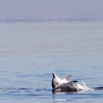 RT @g1: Golfinhos voltam a aparecer na Baía de Guanabara http://t.co/yHQLGg5f5j #G1 http://t.co/P13BxqocpY