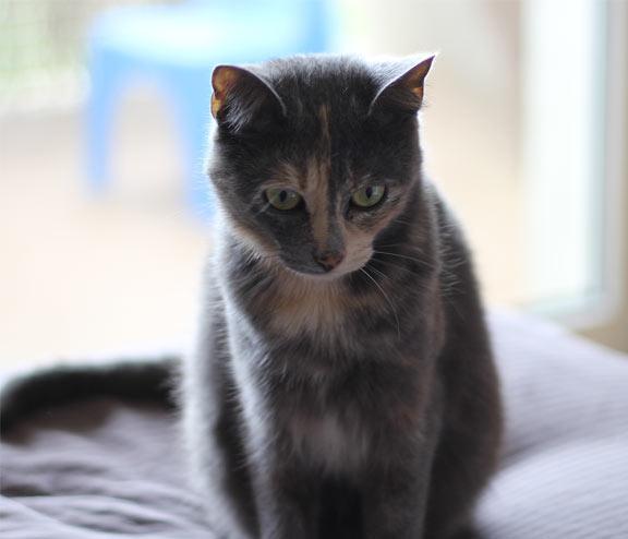 ► Si vous êtes au Plessis Robinson, je recherche toujours ma chatte qui est tombée de mon balcon, merci à tous http://t.co/TyO4FISJJ6