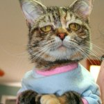 Tucker the adorably abnormal cat is looking for a forever family http://t.co/9nqMO4rUVo http://t.co/knVjN2Vr4C